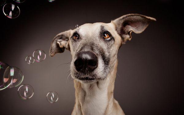 Красивые новогодние картинки на рабочий стол с Собаками ...