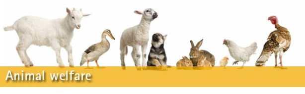 Animal-Welfare-Banner