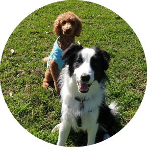 One-on-one dog training consultation