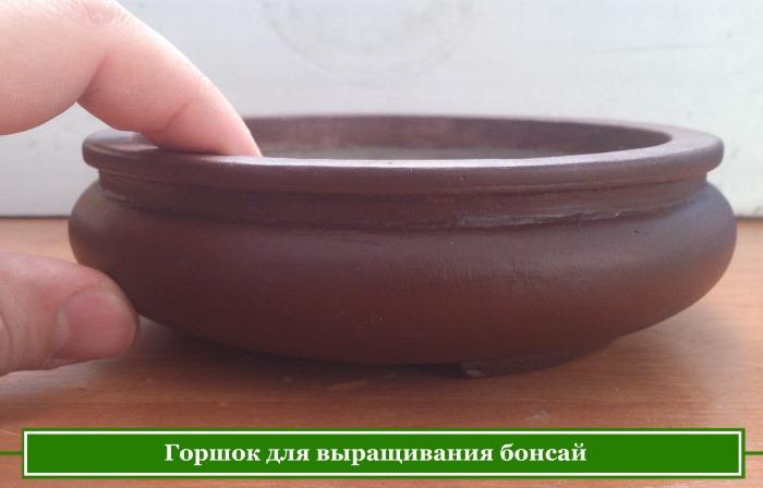Utilisez des pots pour développer Bonsai Bonsai
