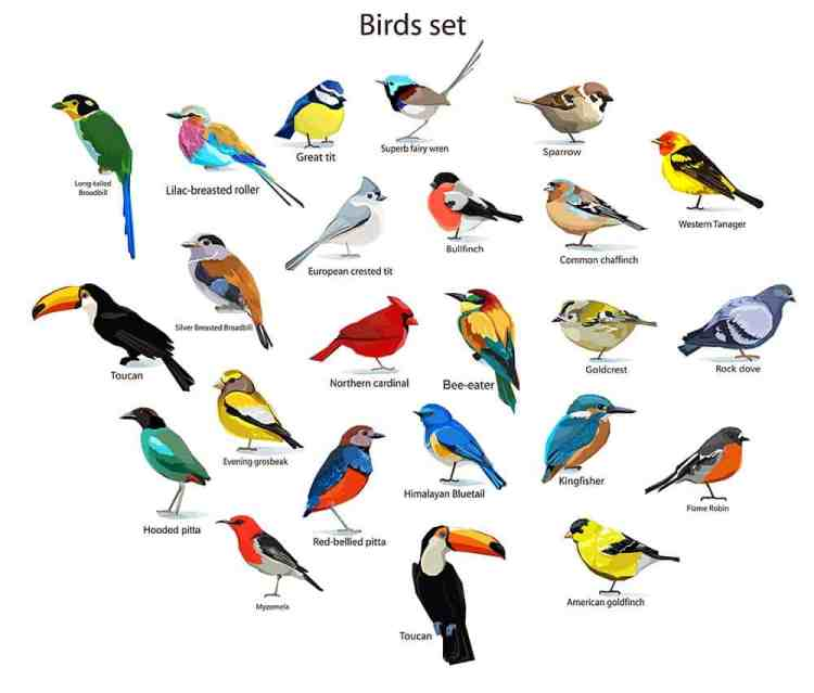 bird watching, infographic on birds in America