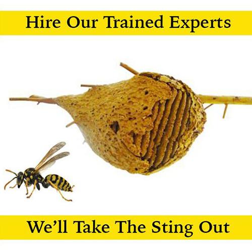 © Good Riddance Pest Management.