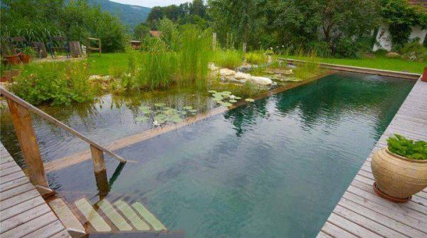 Koi Pond Construction Cost