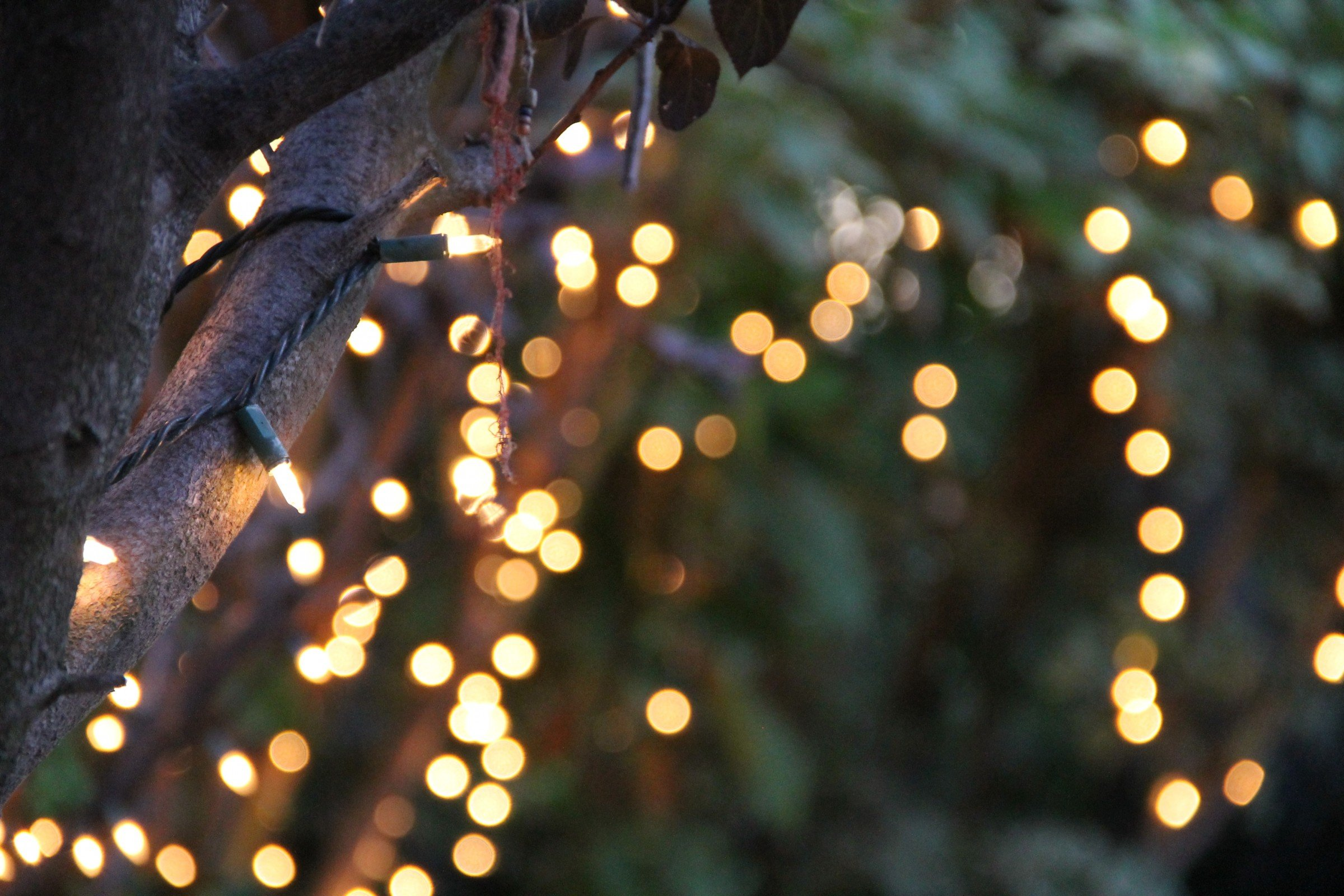 String Lights On Tree Branches : Bokeh of String Lights on Tree Good Stock Photos