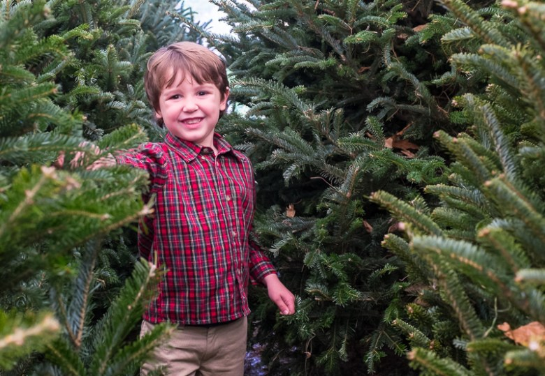 Picking out a tree / Christmas Tree Farms in the Myrtle Beach Area