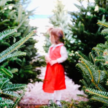Christmas Tree Farms in the Myrtle Beach Area