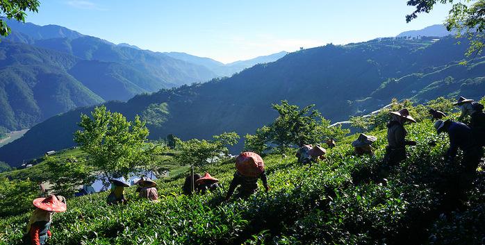 Тайваньский фермерский десант. Продолжение.