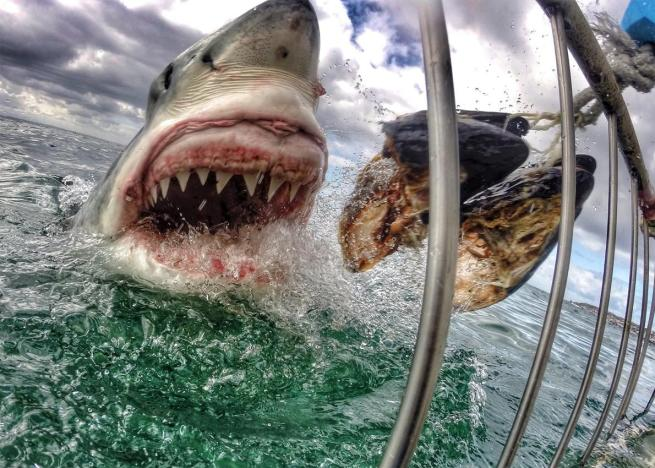The economic value of shark tourism including white shark cage-diving in Australia