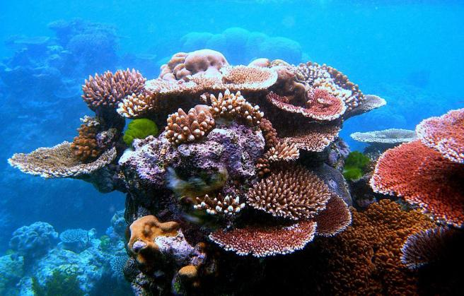 Great Barrier Reef tourism. A variety of colourful corals on Flynn Reef near Cairns. By Toby Hudson, CC BY-SA 3.0, via Wikimedia https://commons.wikimedia.org/w/index.php?curid=11137678