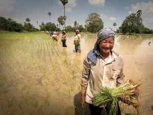 Cambodia community-based ecotourism. Cambodia hard work in the rice paddies. Kevin Evans/AusAID, CC BY 2.0, via Wikimedia. https://commons.wikimedia.org/wiki/File%3ACambodia_-_Working_in_the_rice_paddies_(10678730813).jpg