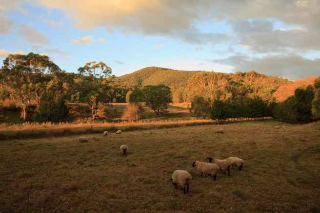 An example of rural tourism in Australia