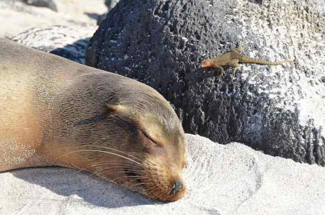 Galapagos tourism must consider its impact on its core attractions