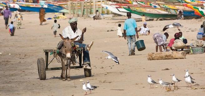 Une plage en Gambie. Par Ikiwaner (CC BY-SA 3.0) via Wikimedia. (