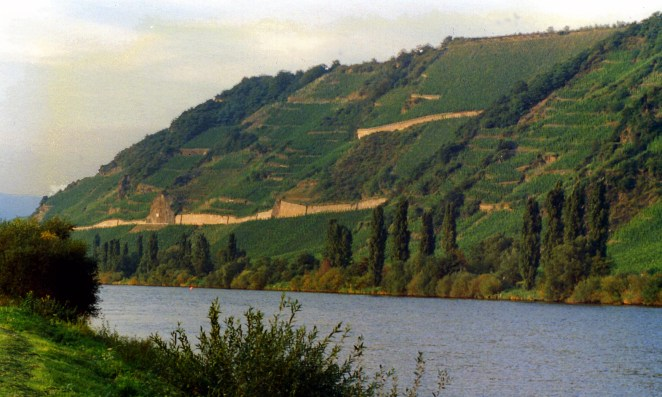 Mosel_vineyard_in_Tittenheim