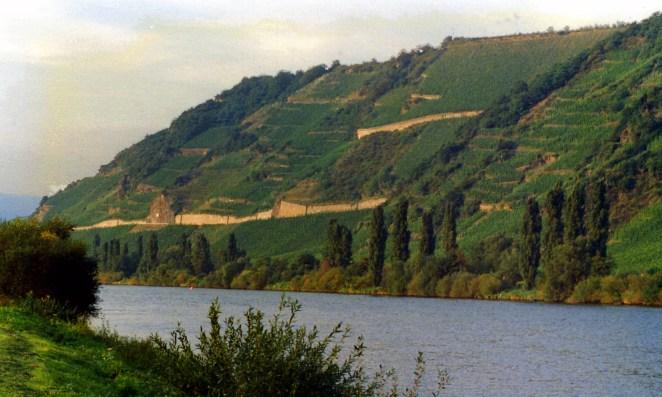 Mosel_vineyard_in_Tittenheim