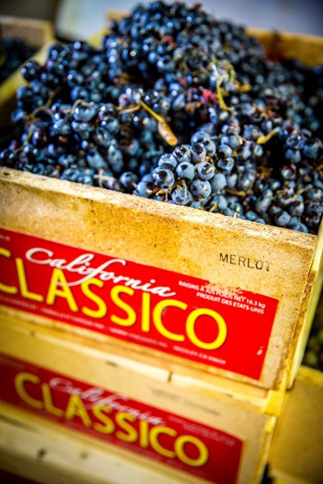 grapes-1692548_1280