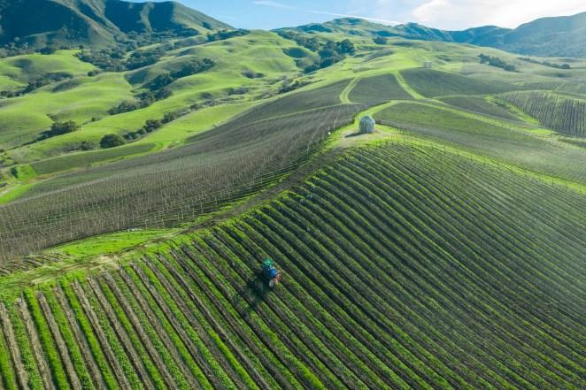 Buellton, California; tractor pre-pruning Chardonay vines, Peake Ranch Vineyard