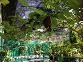 The butterfly farm in KL