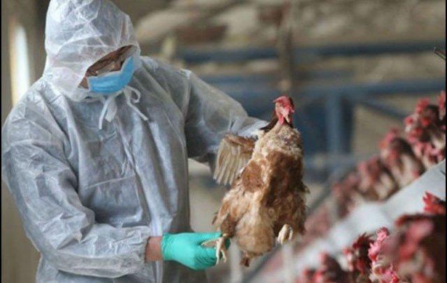 Dangerous bird flu virus could become the next global epidemic