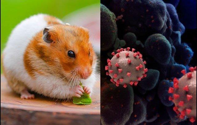 New treatment for corona virus: sniffing nanobody