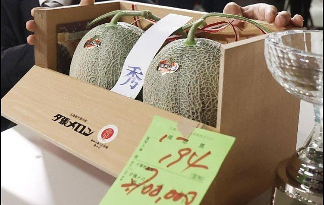 A pair of Japanese melons auctioned for Rs 39 lakh