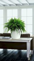 Indoor Garden Office and Office Plants Design Ideas For Summer (2)