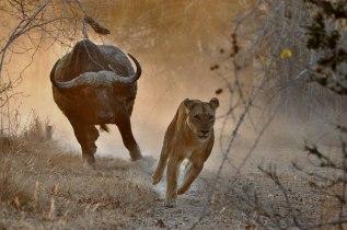 Bugger off ..... Alex Appleby - Safarious