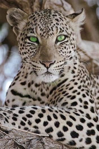 Magnificent creature
