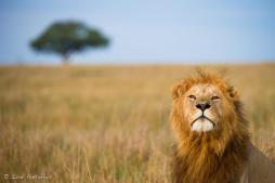 Masai Mara March 2013 - Isak Pretorious Wildlife Photography