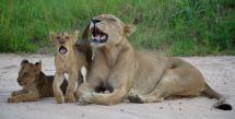Nkombe Camp, Sabi Sands - (Chris Martin Wildlife Photography)