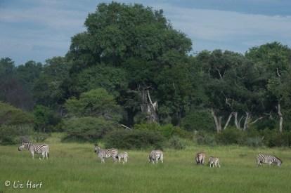 Spectacular Africa