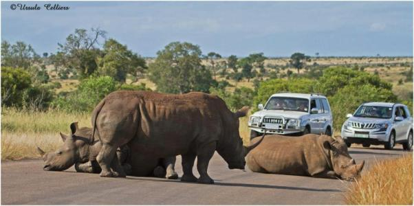 Roadblock in Zimbabwe