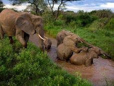 samburu-elephants_3642_990x742