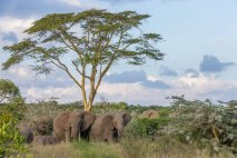 Segera Ranch, Kenya Michael Poliza Photographer