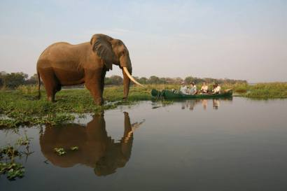 The best way to see elephants