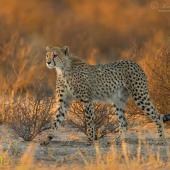 In the bush - Photo © Morkel Erasmus Photography
