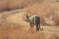 Threatened - Photo Copyright © Aditya Padhye