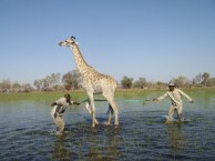 giraffe_rescue1