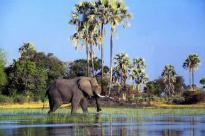 Okavango-Delta-Botswana-Marcus-Wilson-Smith