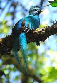 Quetzal - Guatemala