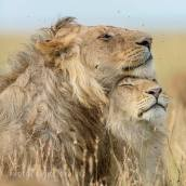 By David Lloyd Wildlife Photography