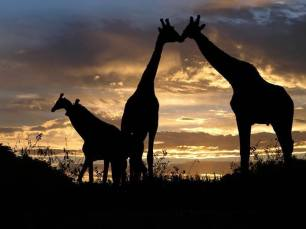 Morning in Africa