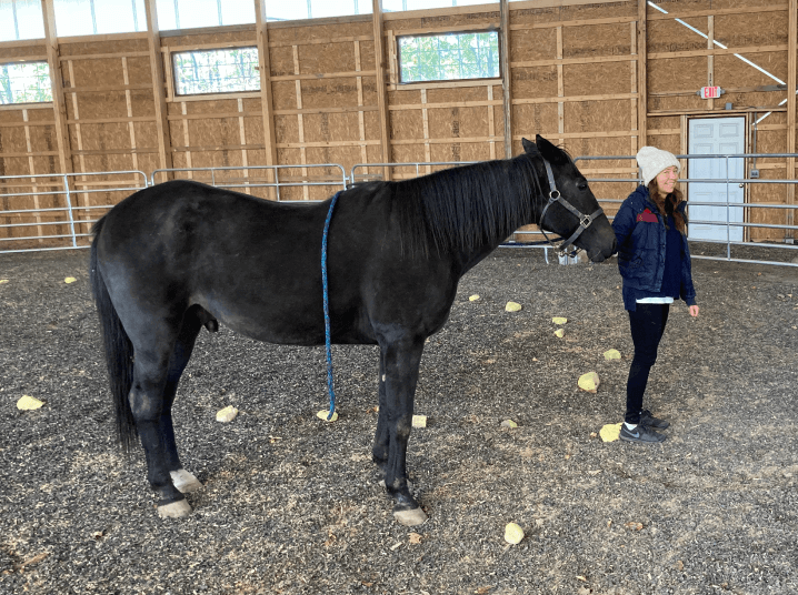 Jean with black horse