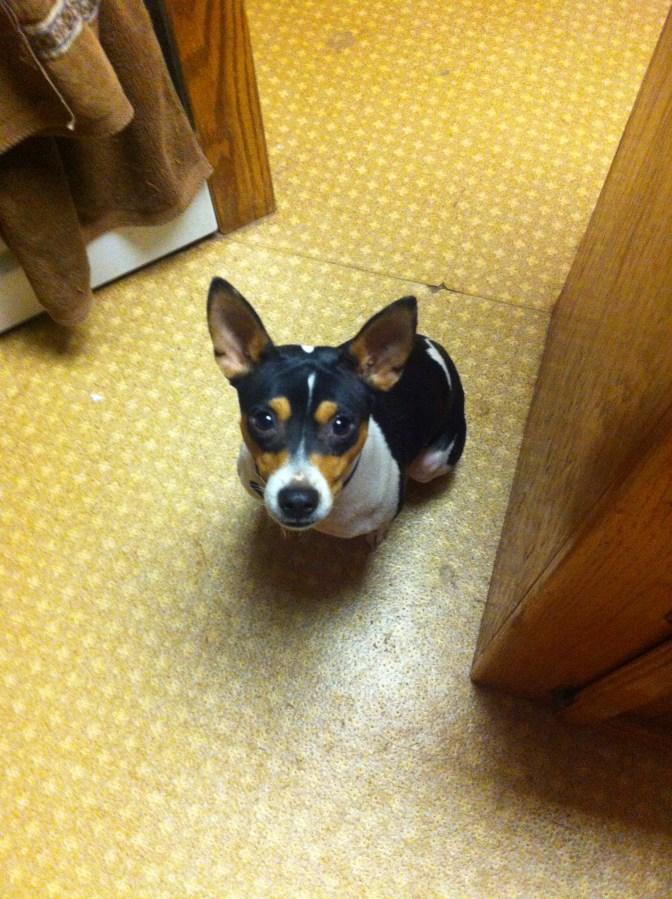 Spike the kitchen helper