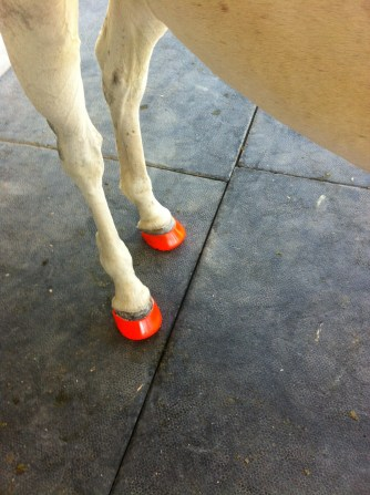 Tempest's hind boots