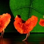 Spring A&E Guide 2011: Dance