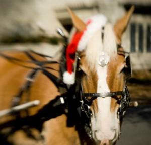 4thwardholidayhometour_horse