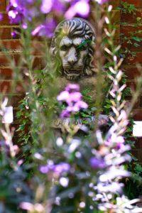 purplegarden_lion