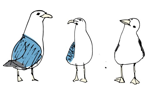 seagulls go radiate