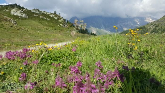 Alpejska łąka